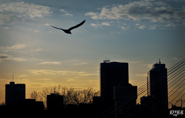 bird over the city at sunset