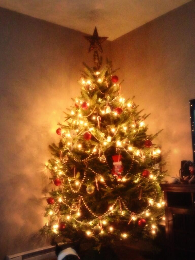 christmastrees3.jpeg