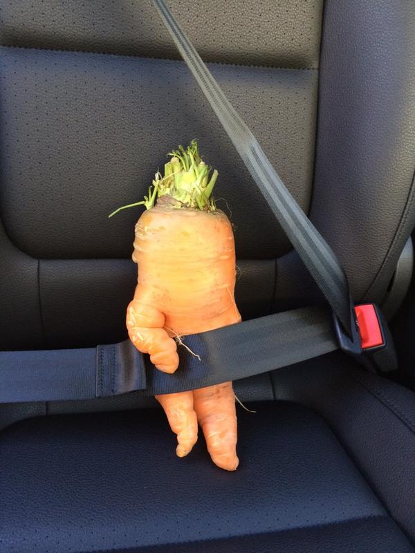 Safety (Carrot) Dance