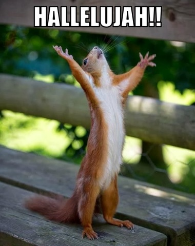 Even squirrels are excited