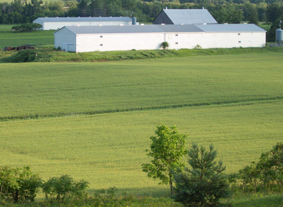 Next Millennium Farms