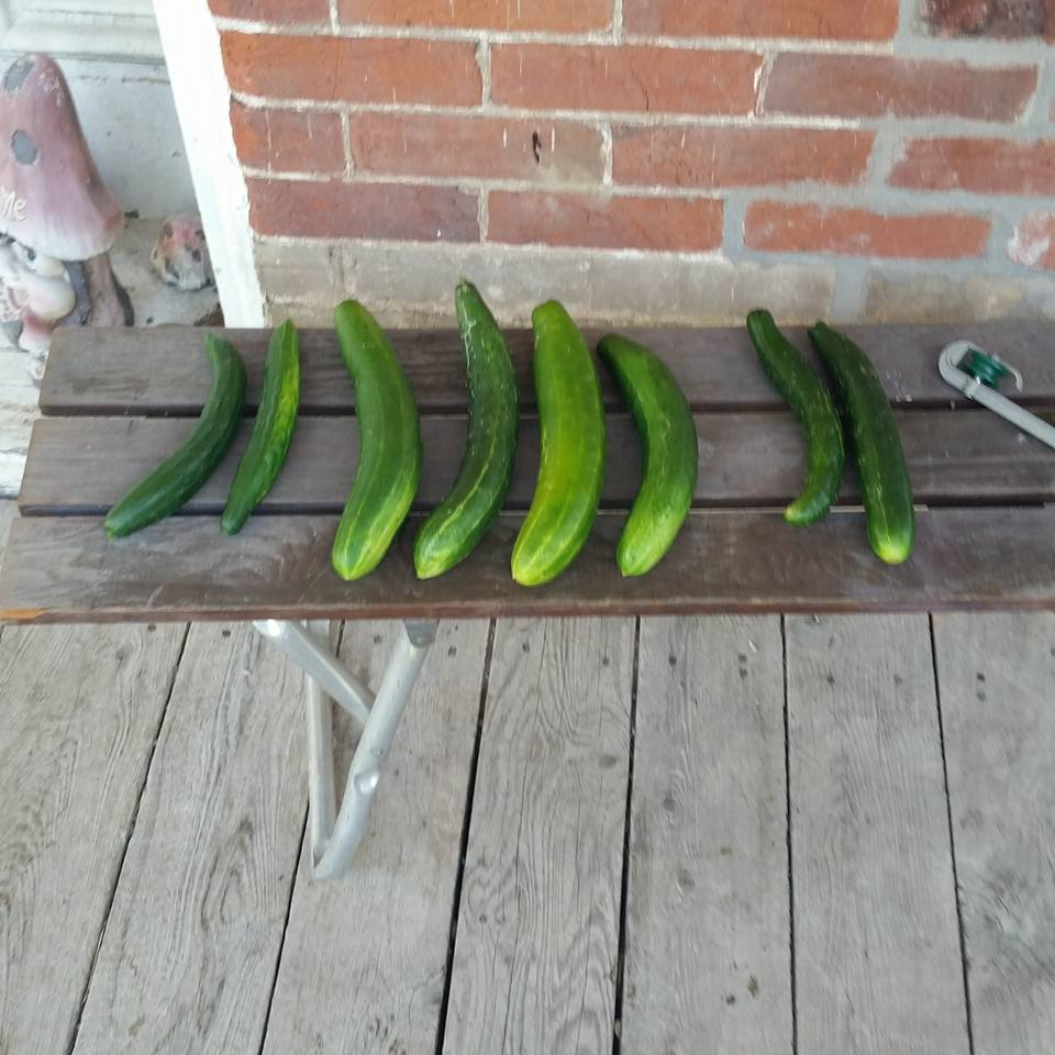 One of the yields from the first harvest in the garden