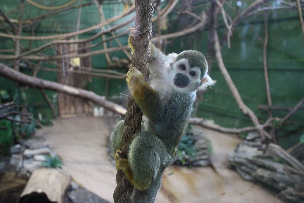 Parks Canada is not monkeying around with its Night At The Zoo