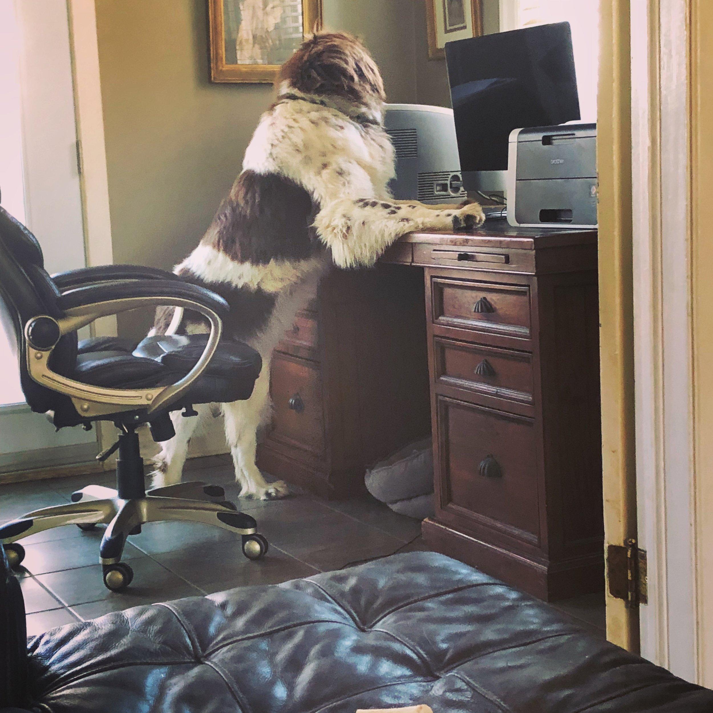 Rosie surfing the internet