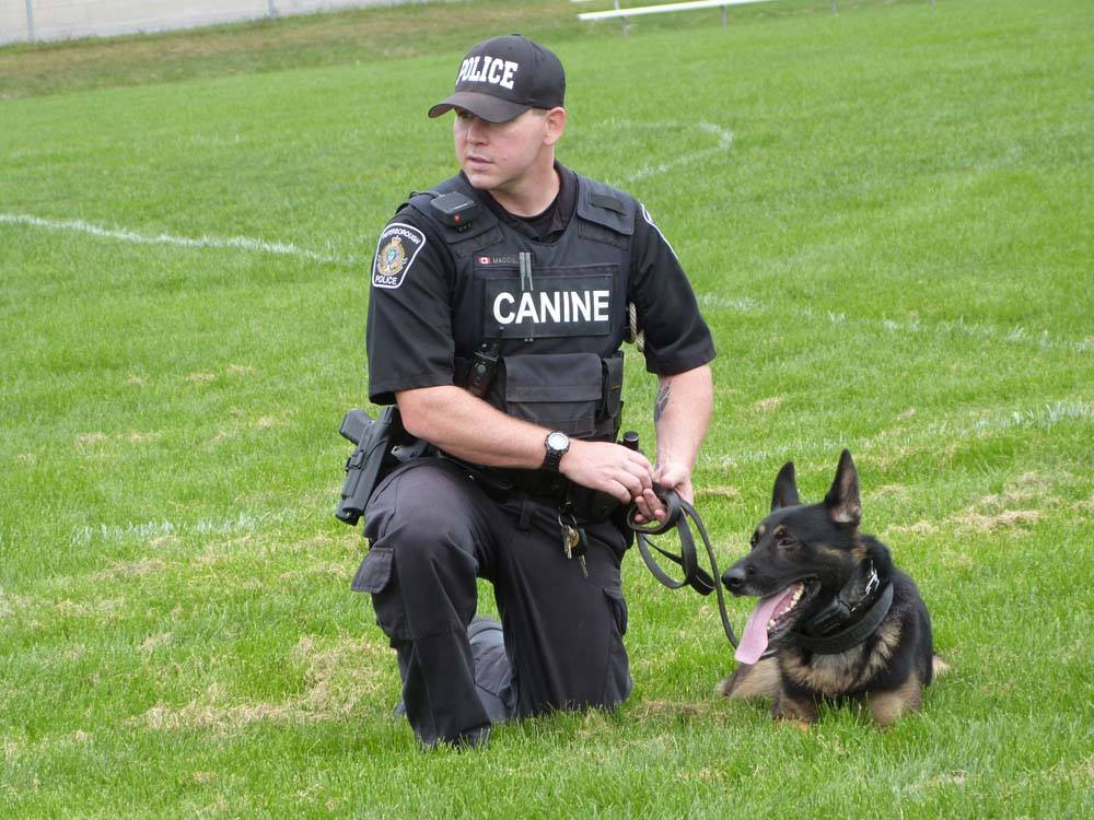Police Service dog Hal pictured with his partner Constable Sam McCullum