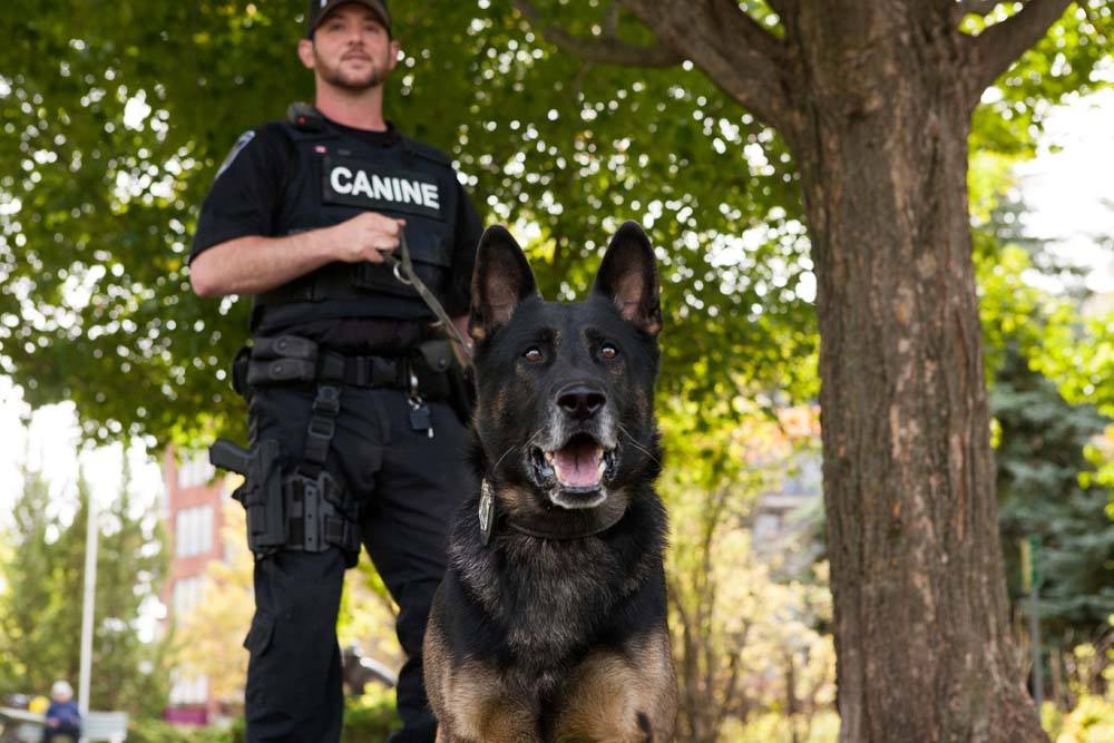 Police Service dog Wolfe pictured with his partner Constable Tim Fish