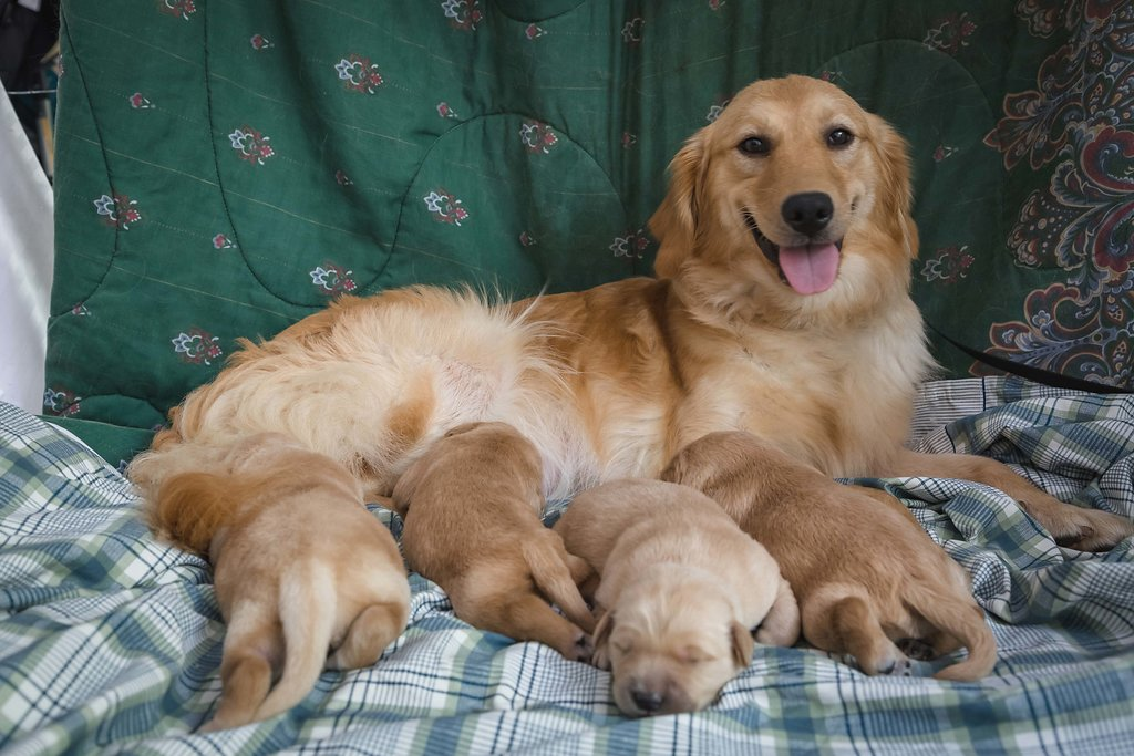 sophia with puppies.jpg