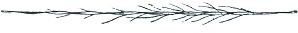 Plume_de_Grue_couronnée_(Millot-1907).png