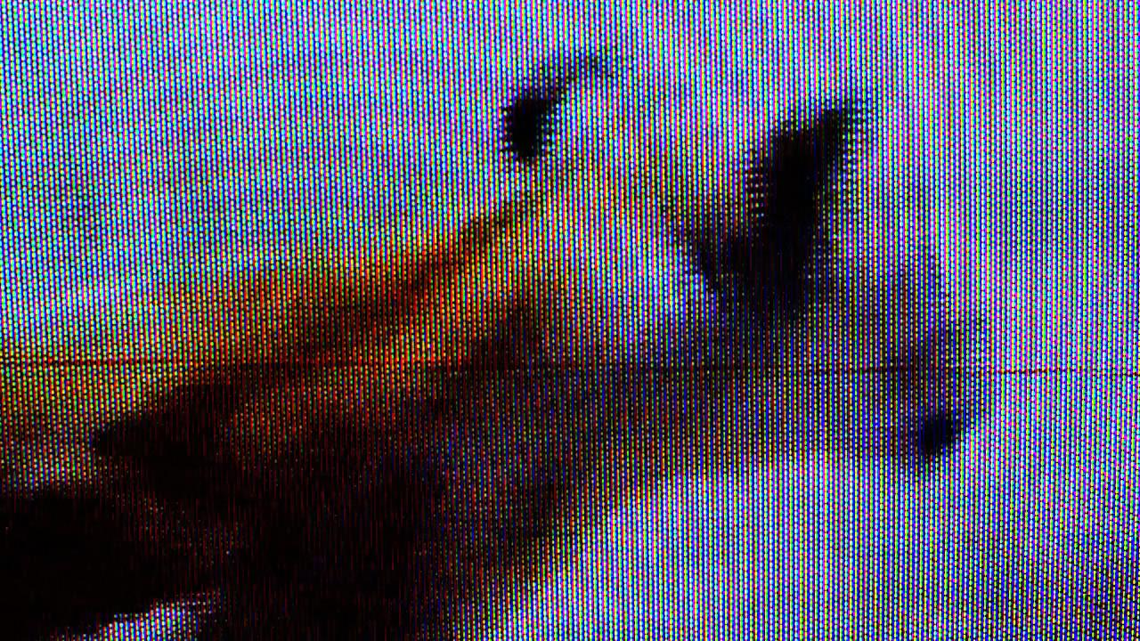 0_lion v zebra Copy.png