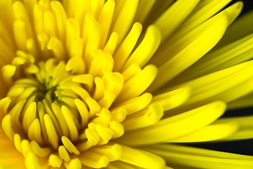 Botanicals-10_SM.jpg