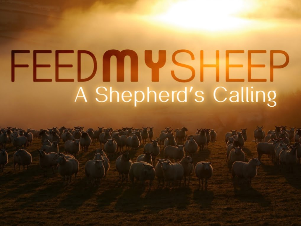 Feed My Sheep 1.jpg