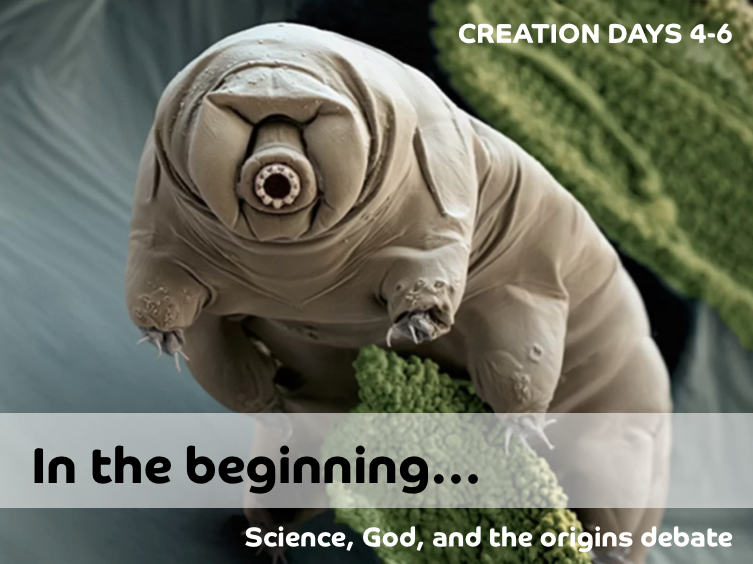 11_Creation_Days_4-6.png