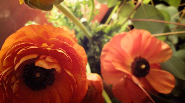OrangeRununcs01.jpg
