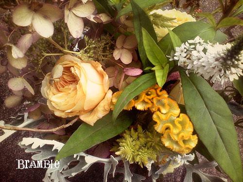 gardenrose.jpg