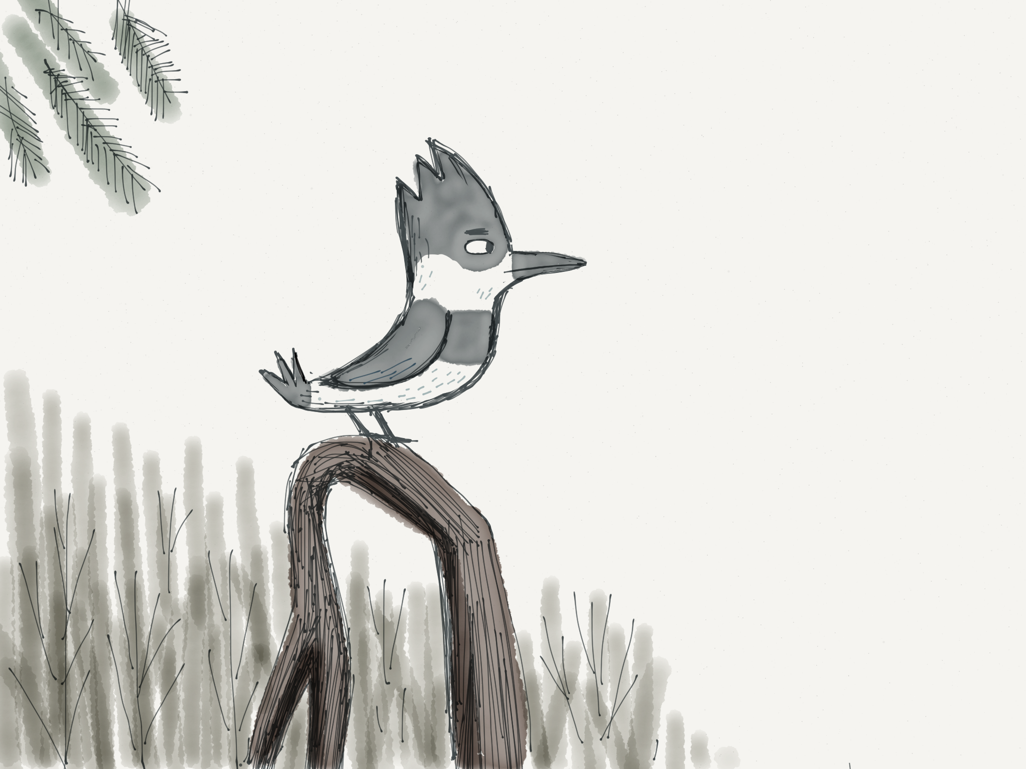 Love Kingfishers. Here's concept idea for bird.Final bird design is more  Bluejayesque.  Appropriate as Blue Jays are so super squawky.