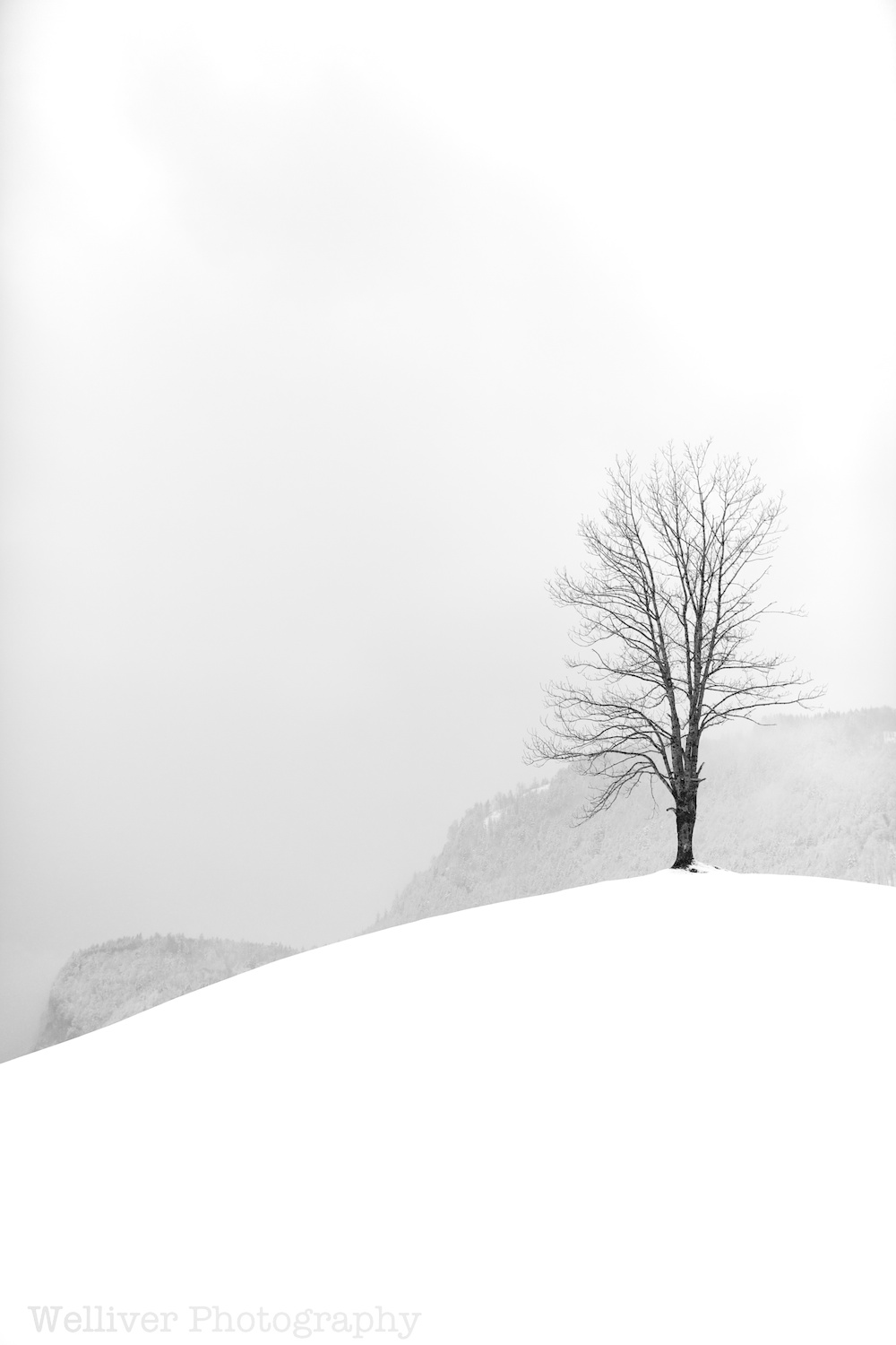 Switzerland: Lone Tree on a Snowy Hill by Beth.