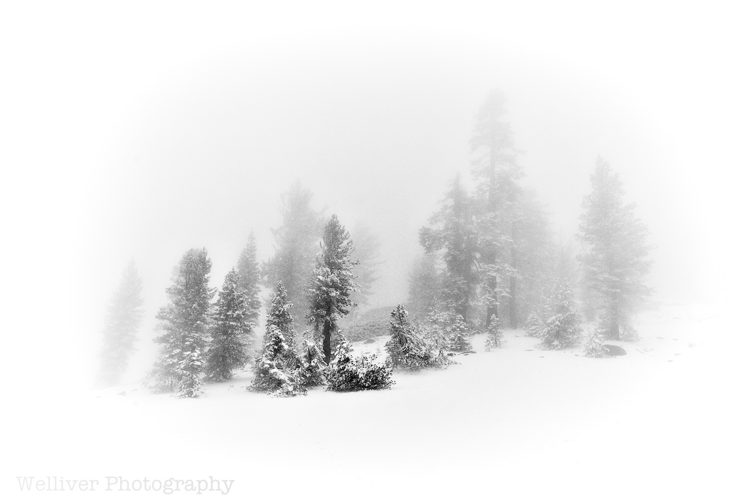 Kaiser Wilderness: Snowy Scene by Terry.