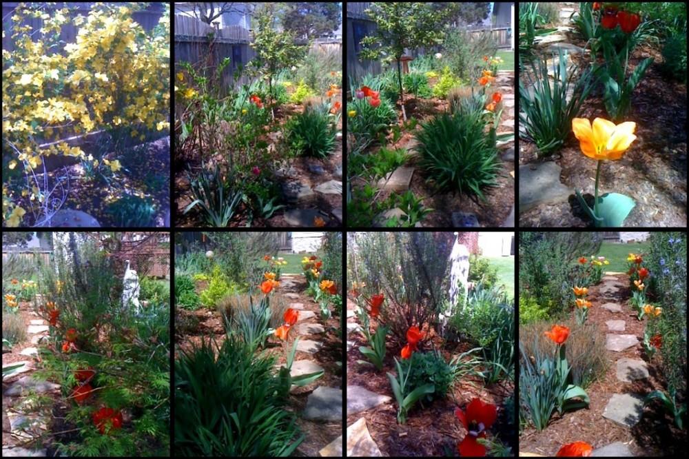 VanReece garden Spring 2010
