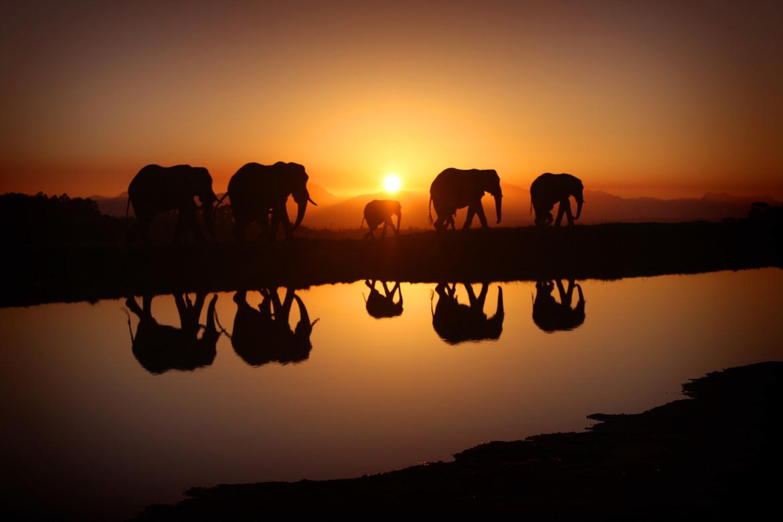 Serengeti Sunrise with Elephants