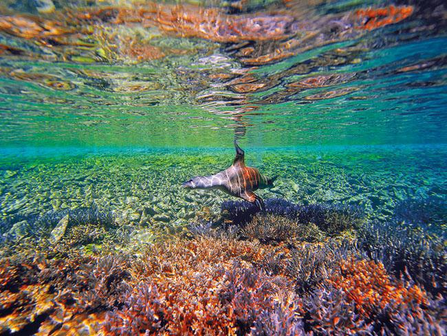 Abrolhos Waters, 60km west of Geraldton WA