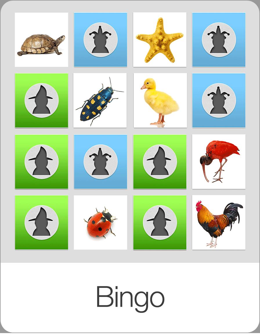 Bingo-Preview@2x.png