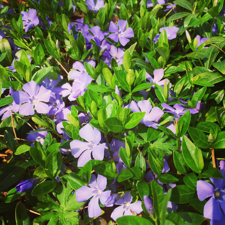 Spring flowers in Nashville