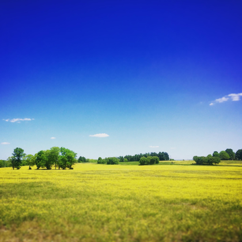 Franklin, TN springtime.