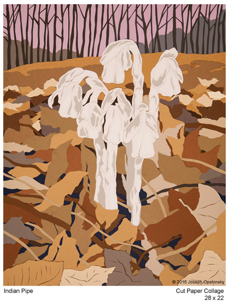 Indian Pipe (2016)
