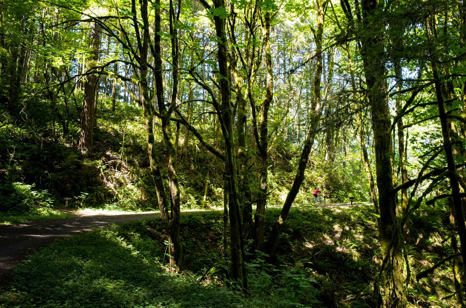 ForestPark_00006.jpg