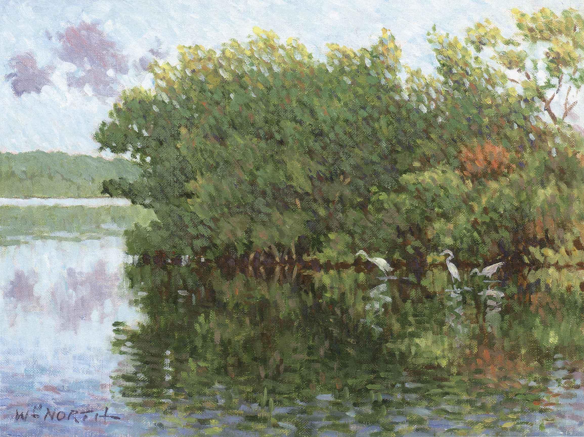 florida-mangroves.jpg