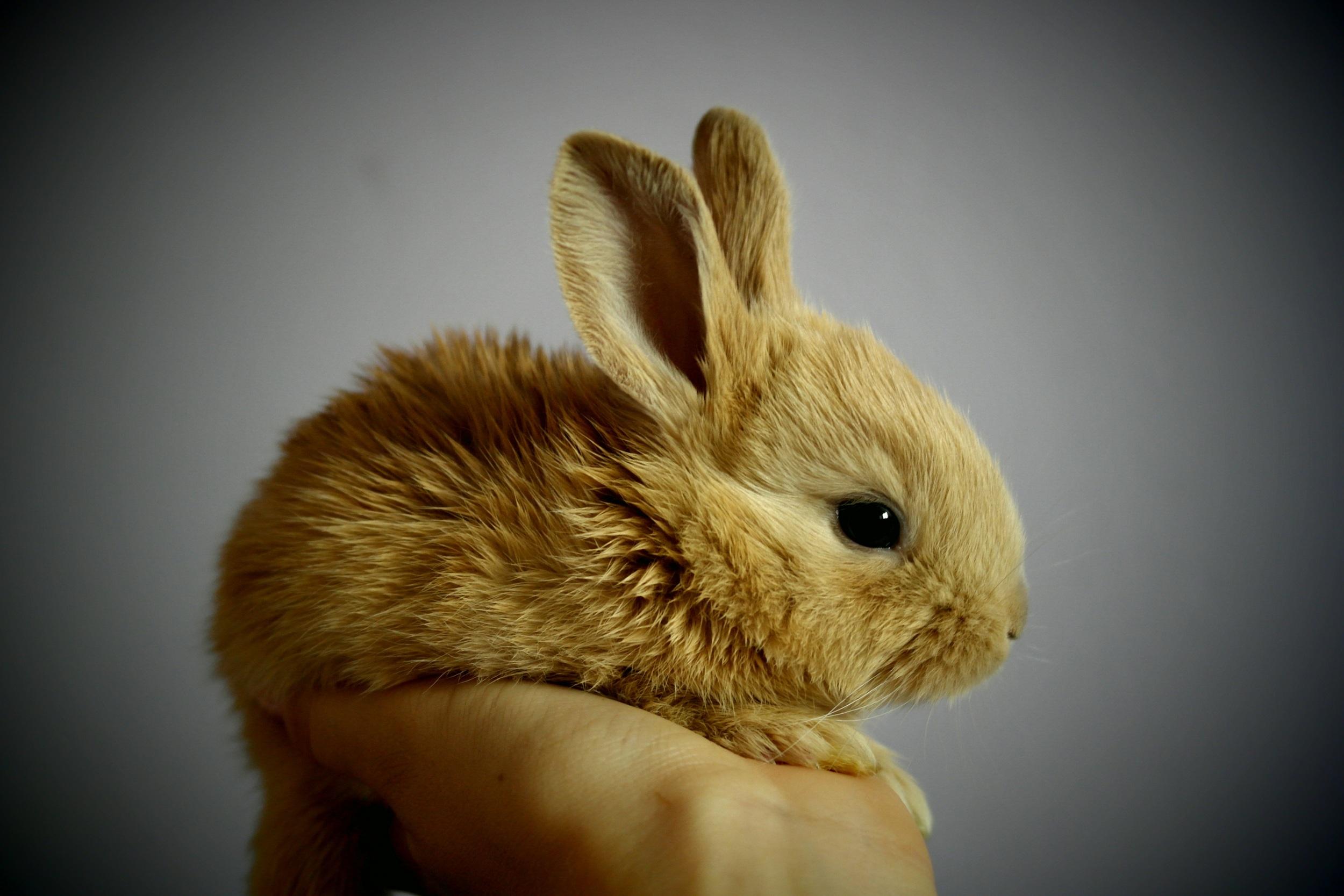 rabbit-373691.jpg