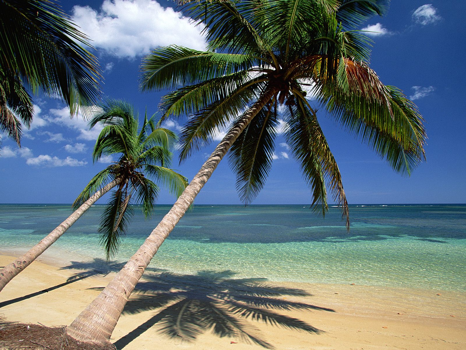 chainimage-coconut-palm-tree-pictures-facts-on-coconut-palm-trees.jpg