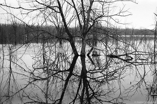 ©heathersmithjones_film_wetlandsbandw.jpg