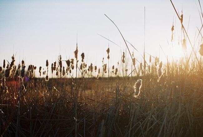 ©heathersmithjones_wetlandsfilm3.jpg