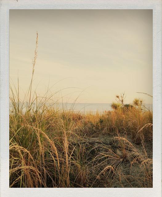 ©HeatherSmithJones_Journal_jan52013_dunes.jpg