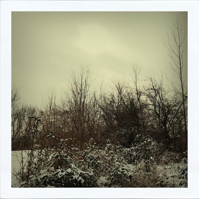 ©HeatherSmithJones_snowtrees.jpg