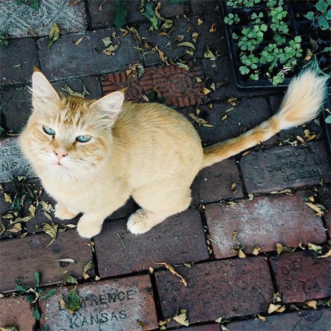 Tommycat.jpg