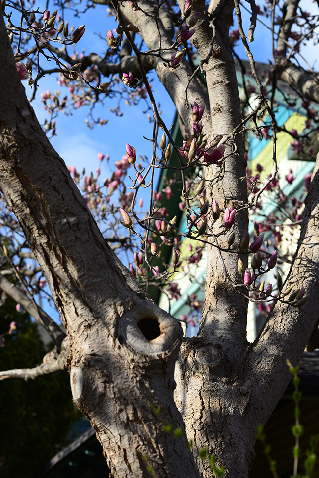 And the tulip tree.