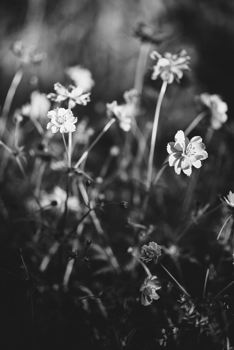 ©HeatherSmithJones_gardenbw_Oct514-2.jpg