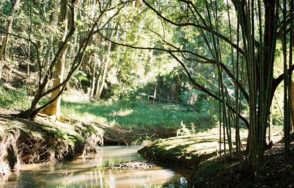 Enchanted Garden-1-68.jpg