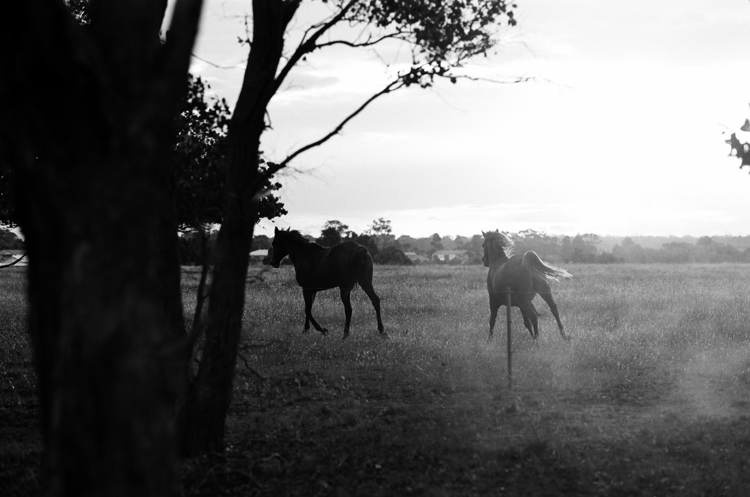 Josie Richardson Photography-19.jpg