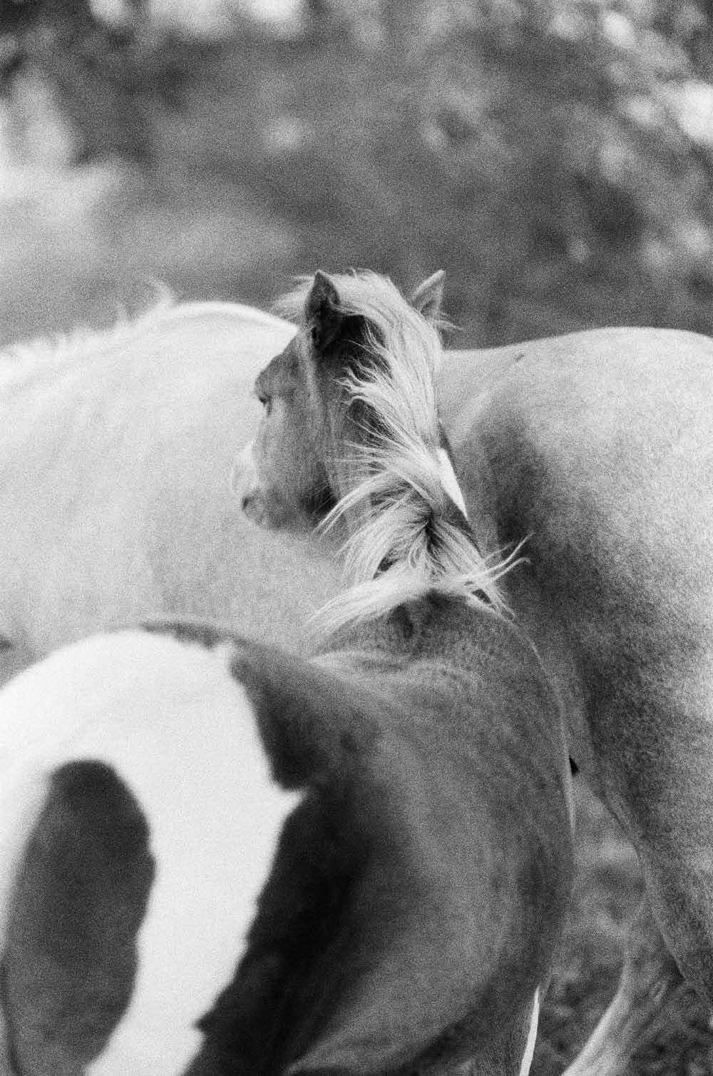 Josie Richardson Photography-1.jpg