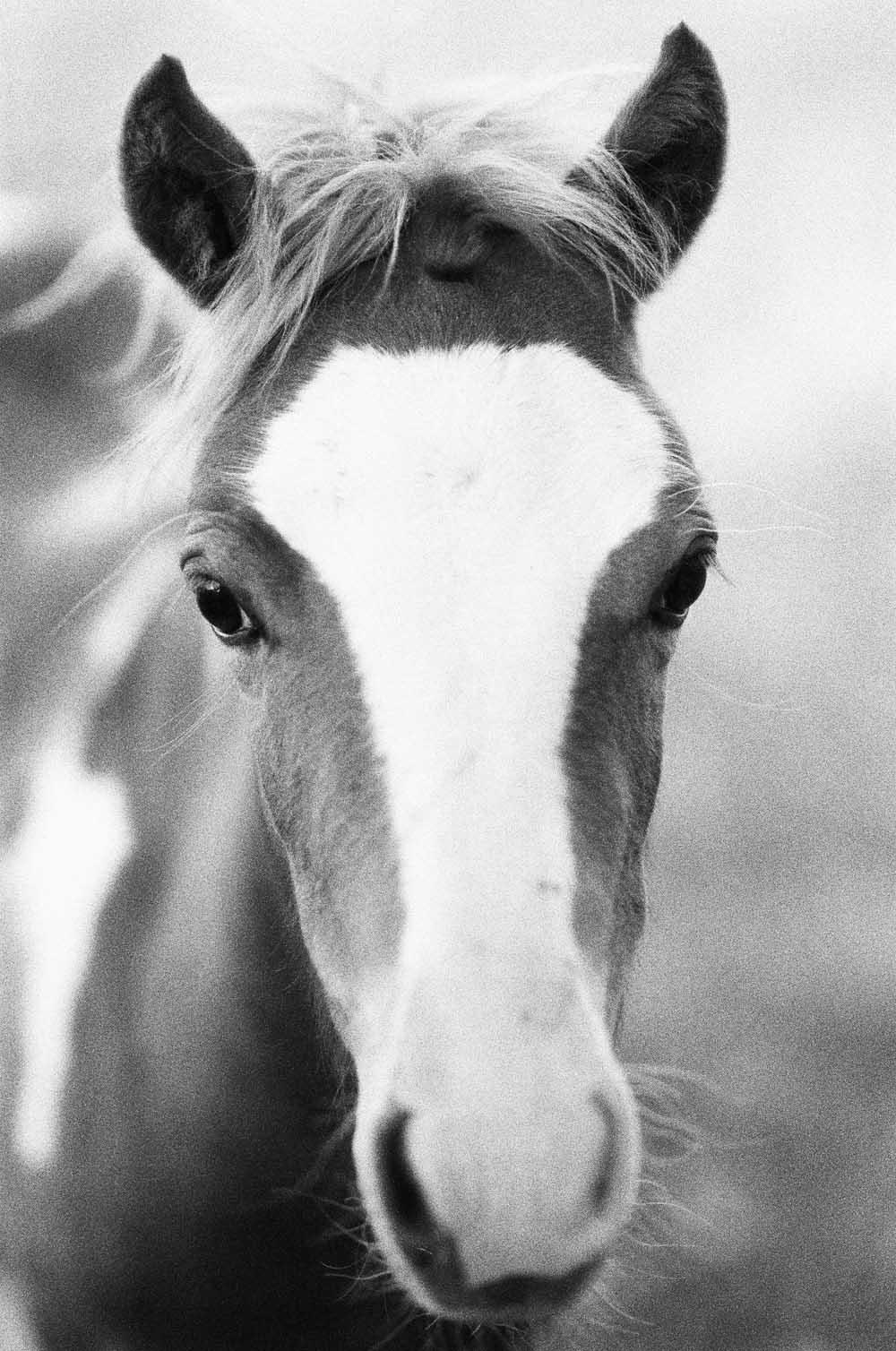 Josie Richardson Photography-9-2.jpg
