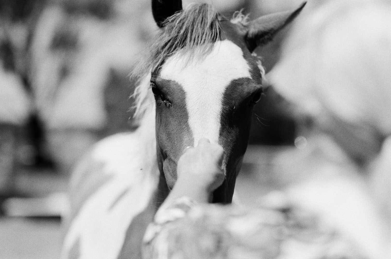 Josie Richardson Photography-15-2.jpg