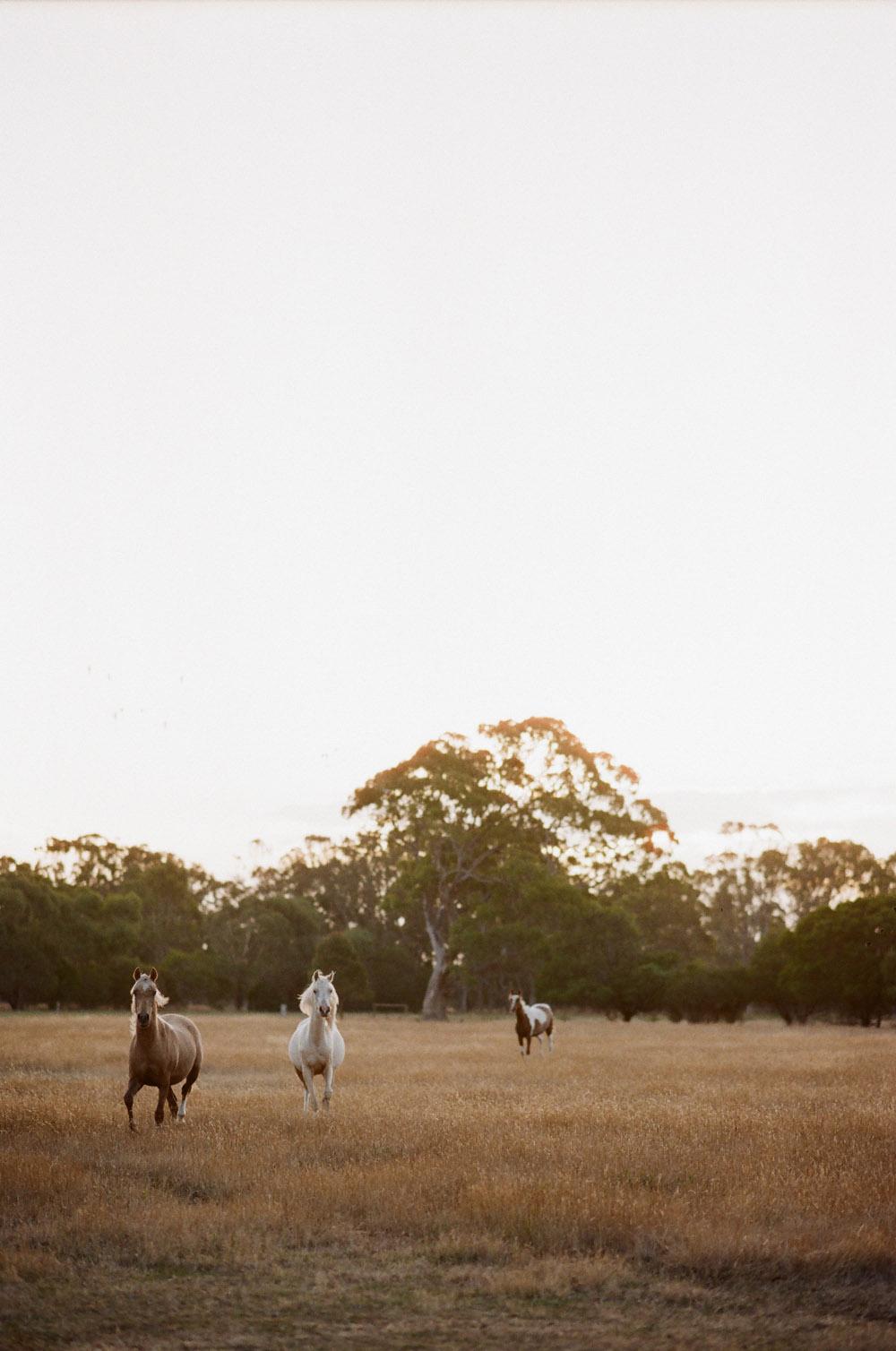 Josie Richardson Photography-25-3.jpg