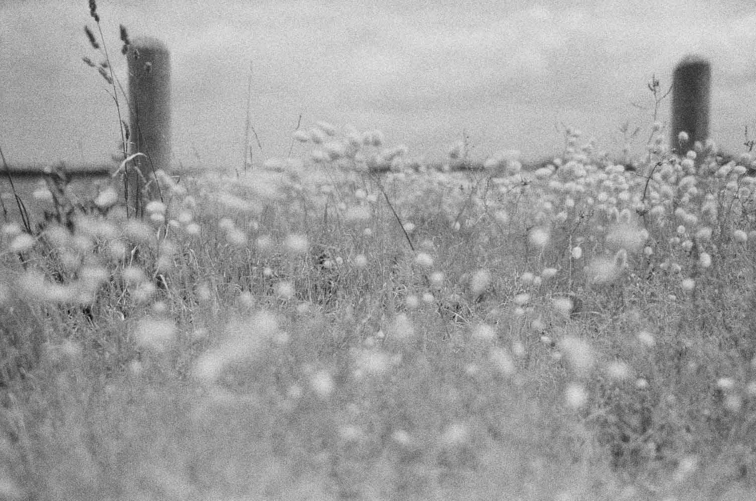 Josie Richardson Photography-64.jpg