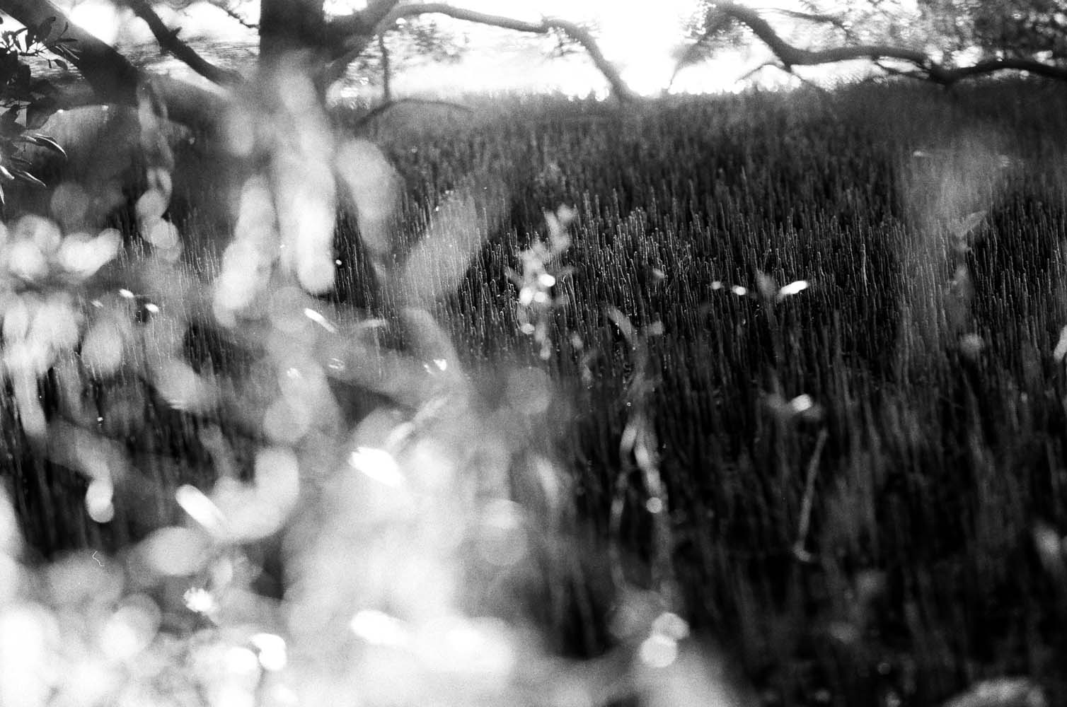 Josie Richardson Photography-40.jpg