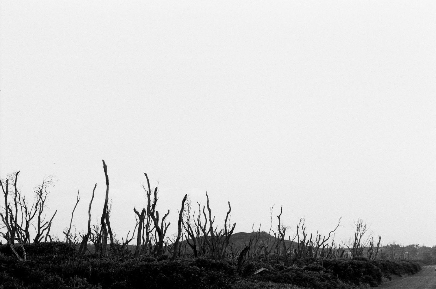 Josie Richardson Photography-46.jpg