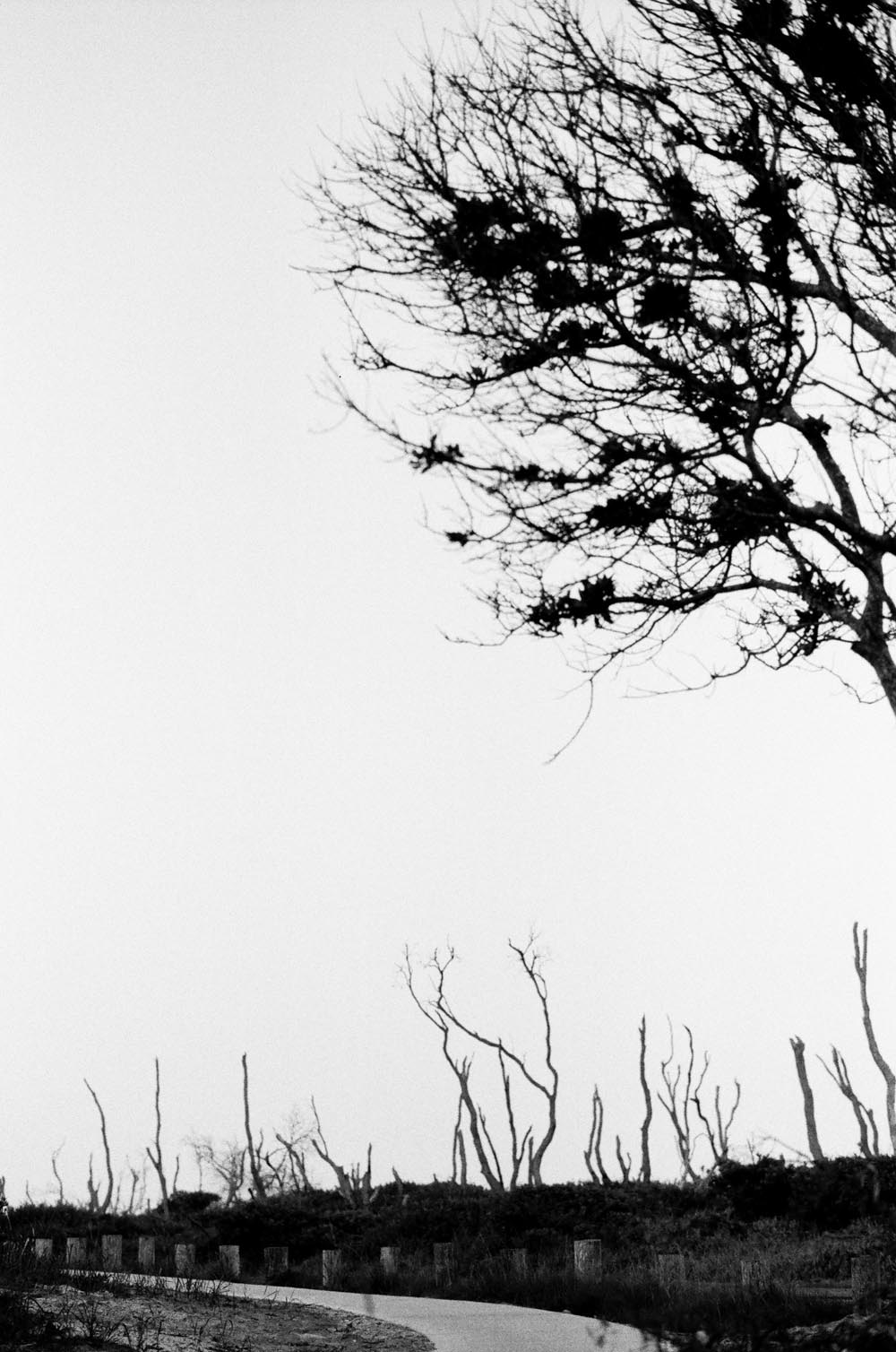 Josie Richardson Photography-47.jpg
