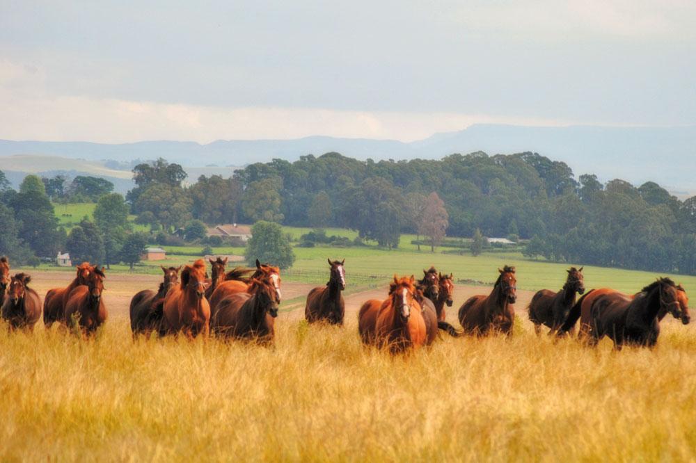 horse-riding-midlands-meander.jpg
